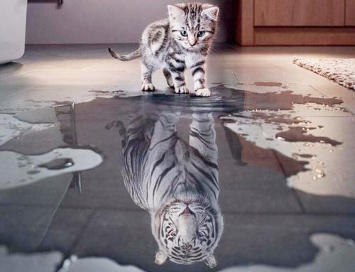 Believe in yourself cat vs tiger